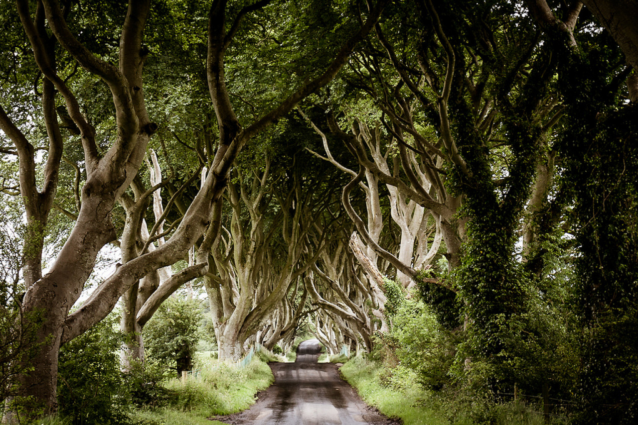 Last stop: The Dark Hedges
