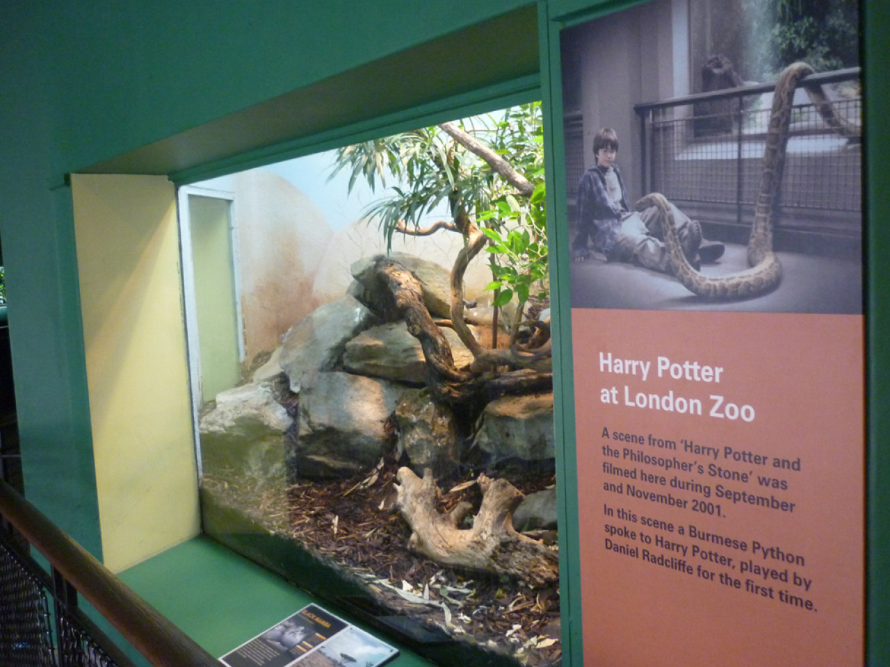 The filmed enclosure actually houses the zoo's resident Black Mamba.