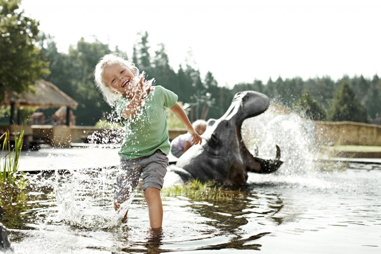 Taming hippos at Knuthenborg Safari Park.
