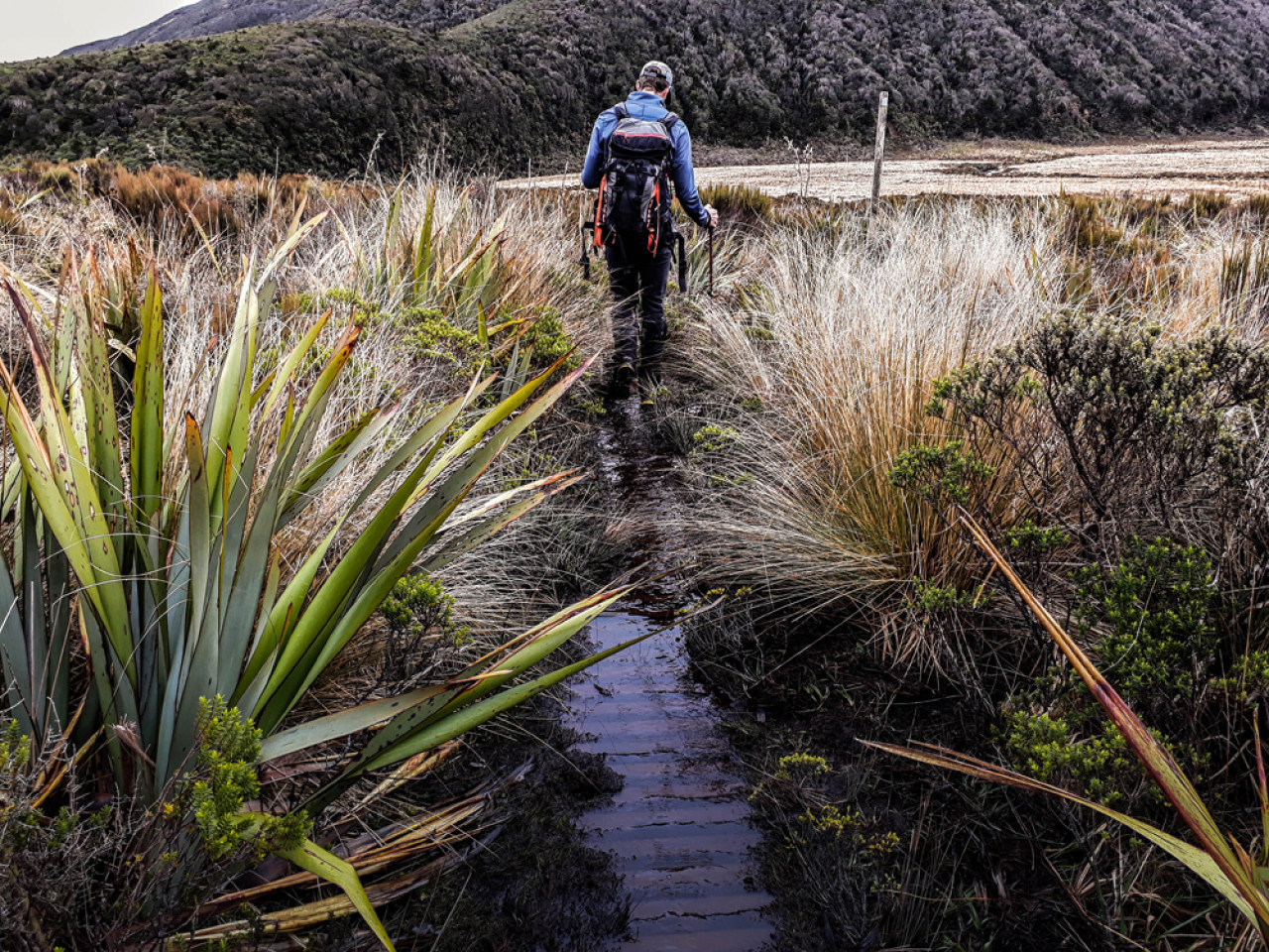 Here JJ traverses the extensive Ahukawakawa wetland.