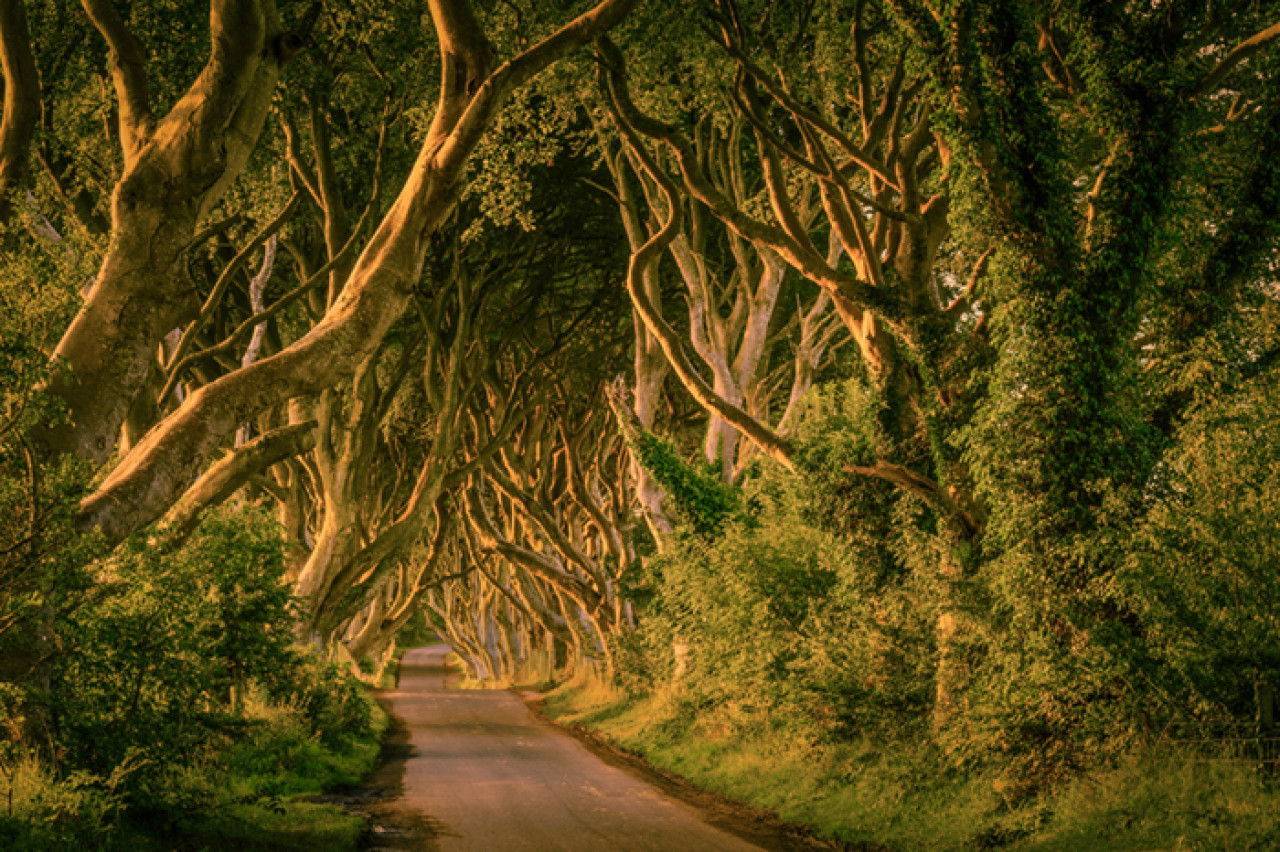 The Dark Hedges, better known as The Kingsroad.