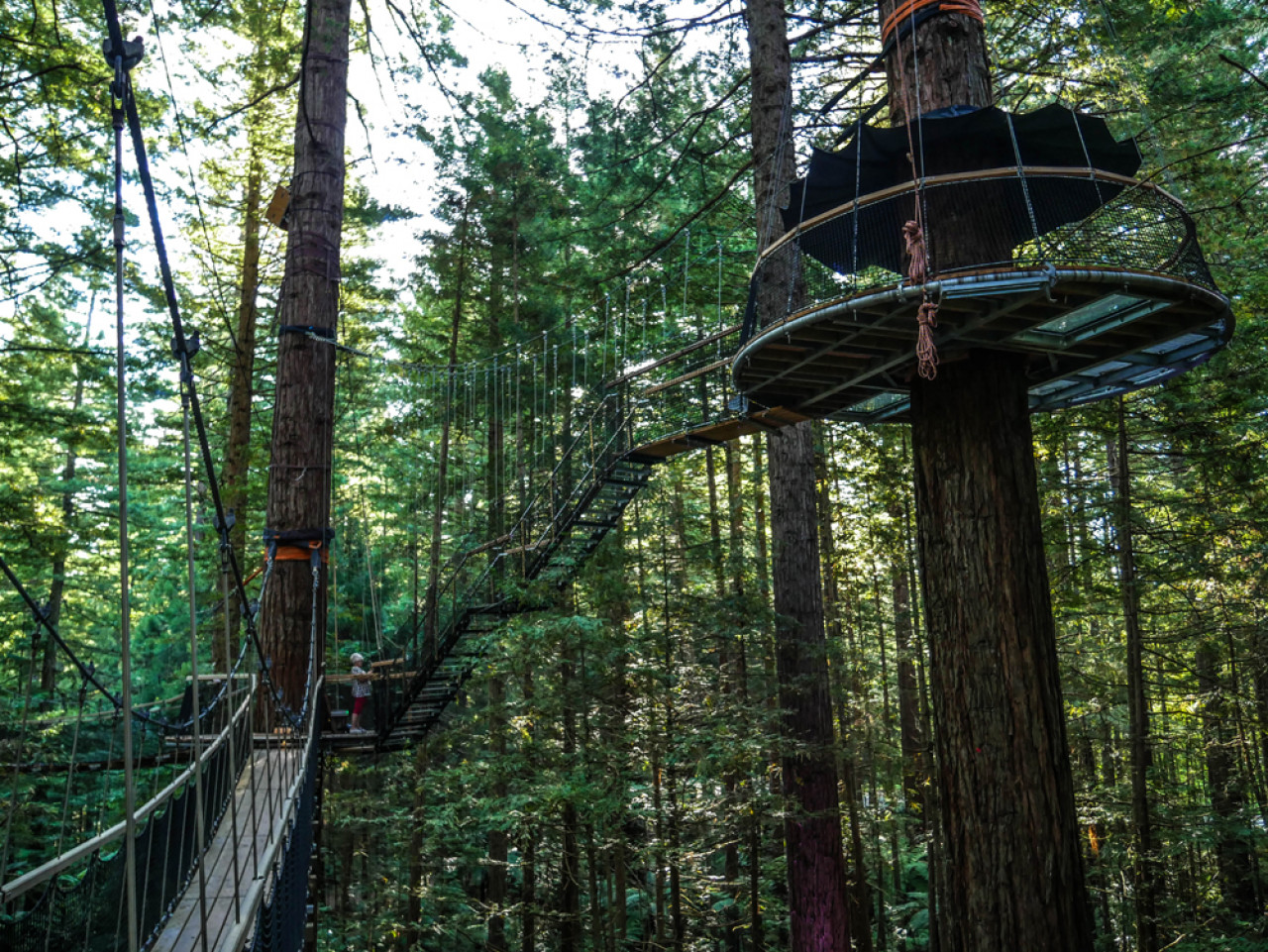 My personal highlight was the tower platform pictured above. Not only do you have an amazing 360 degree bird's eye view, it also gives you the feeling you're literally floating above the forest.