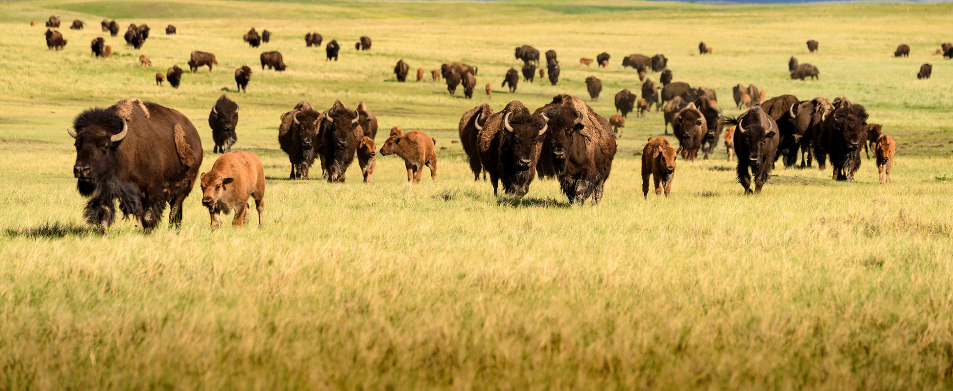 South Dakota's Frontier