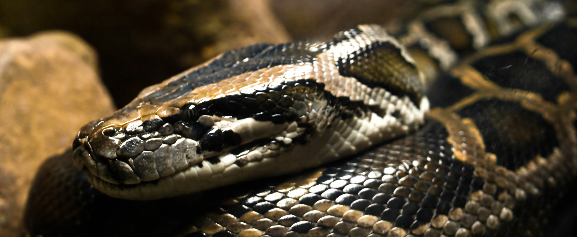 The Reptile House at London Zoo: Parseltongue Talk