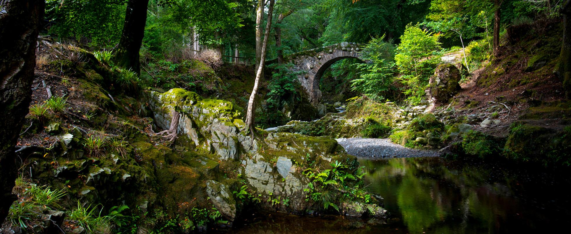 Tollymore Forest: The Woods of Winterfell