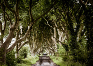 The Dark Hedges: The Kingsroad