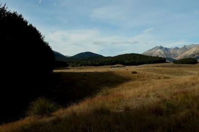Fangorn Forest: Mavora Lakes Road